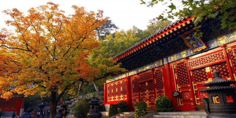 Fragrant Hills Park autumn leaves ornamental Raiders